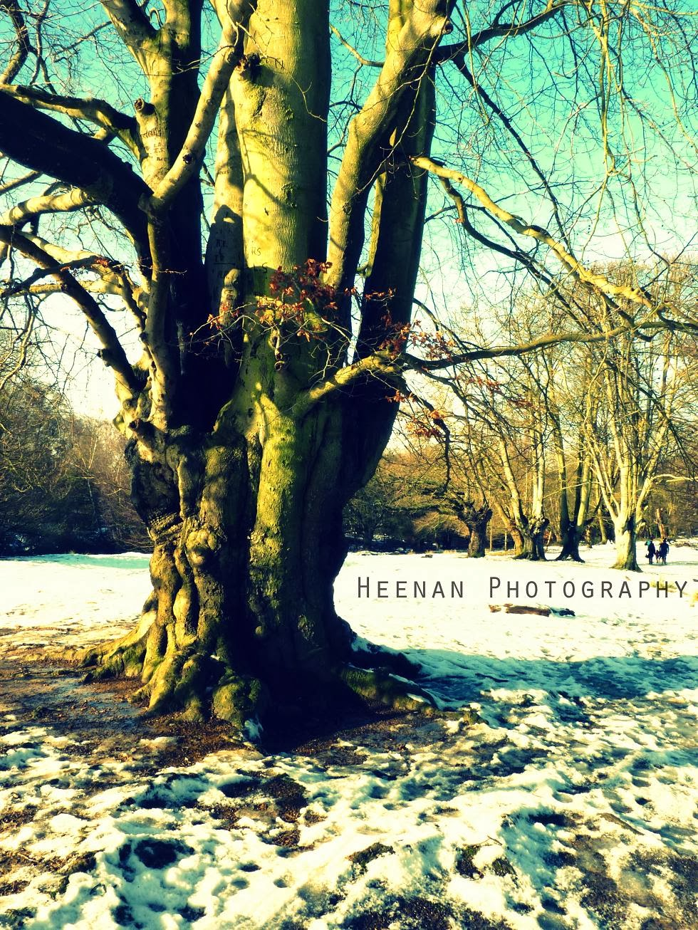 """To Beeches in Winter"" by Heenan Photography"