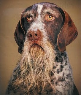 sindrome disfuncion cognitiva perros