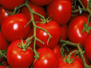 Cara Menghilangkan Jerawat Dengan Tomat Secara Efektif