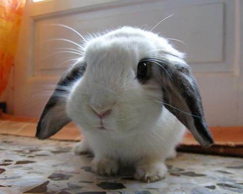 cool wallpapers cute bunny rabbits
