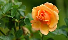 مختارات من أروع صور الأزهار