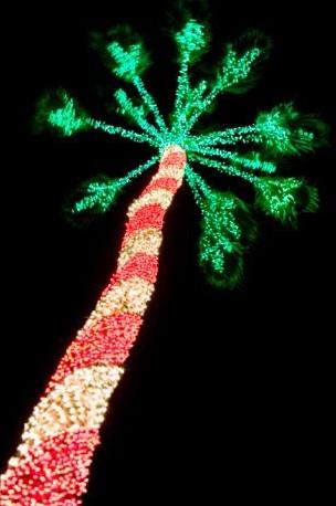 Christmas Lights For Tree Trunks