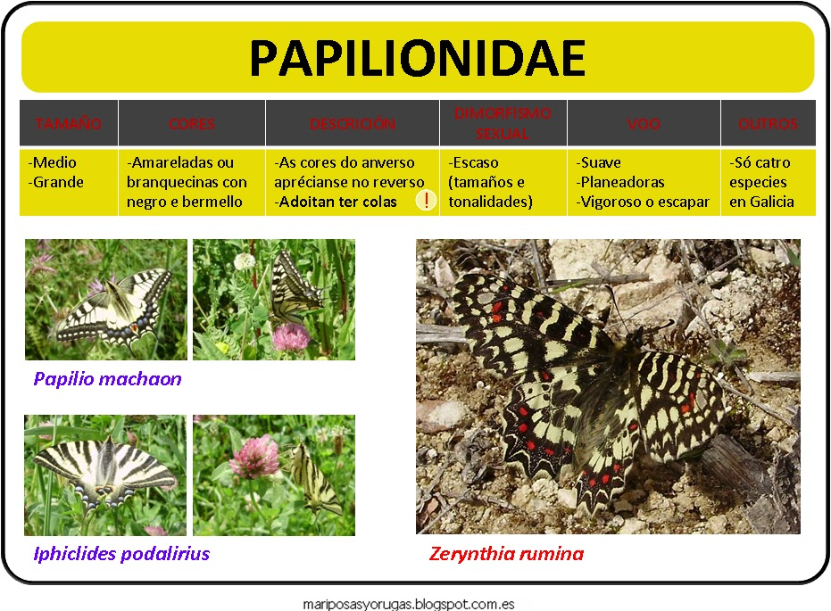 Papilonidae
