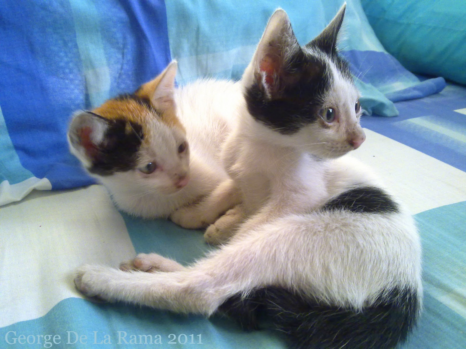 my two stray kittens can u0027t fight this feeling in the kitchen