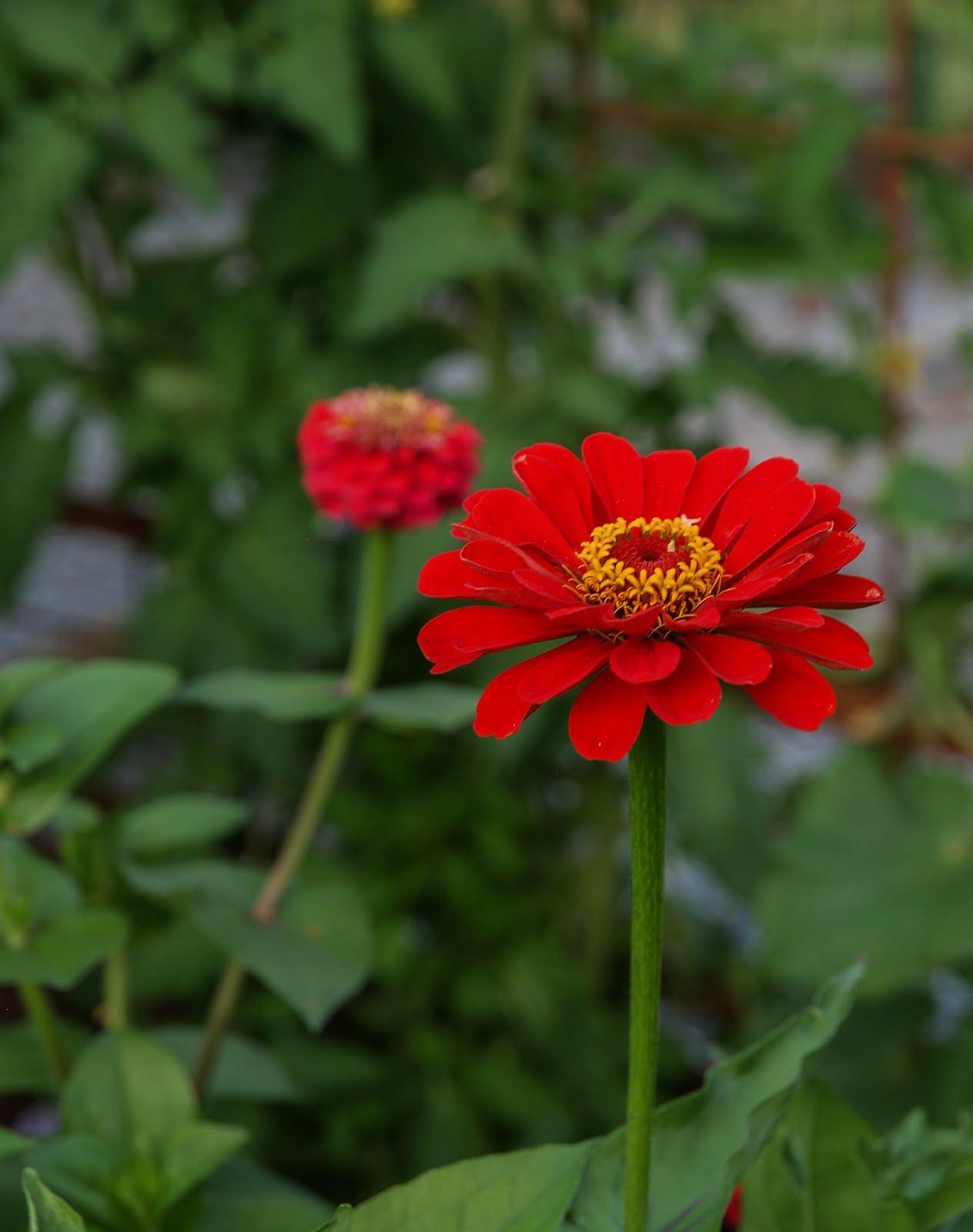 Och blommorna