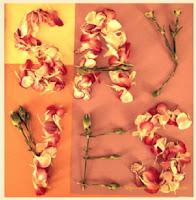 New End Studio flower message