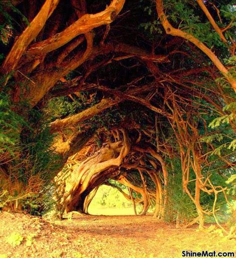 Yew Tree Tunnel, Carmarthenshire, UK