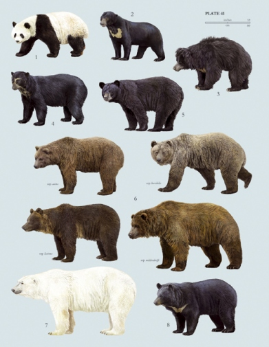 Excitement N Net: Smallest Bear in the World - Honey Bear
