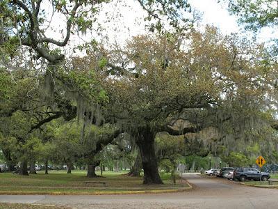 live oaks with Spanish moss:  City Park, NOLA