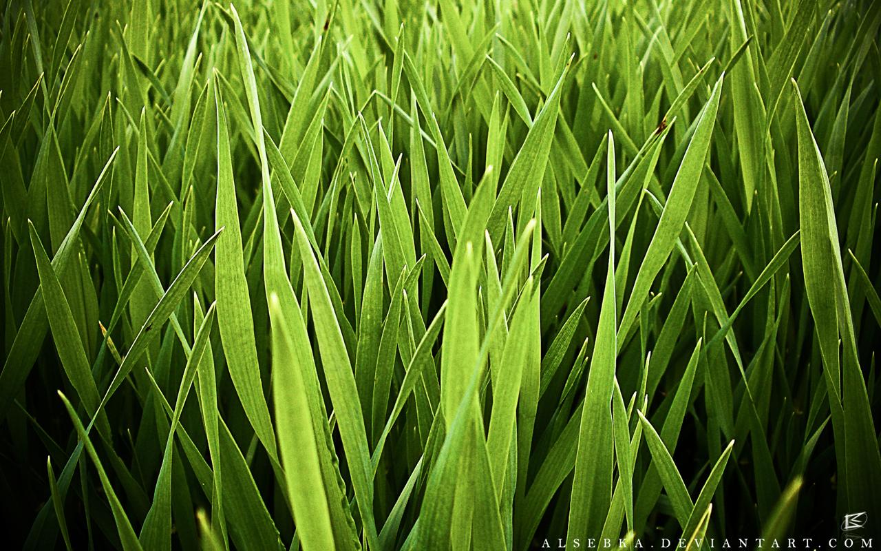 Cartoon Grass Field