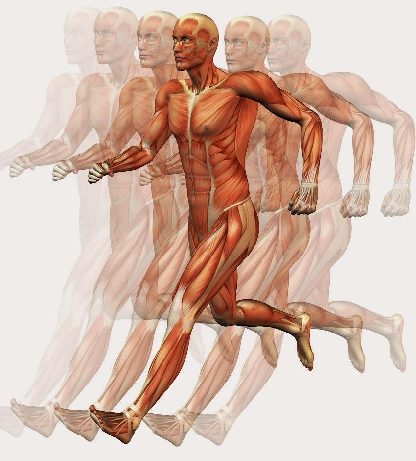 Temas de las clases: Fotos de los movimientos del cuerpo humano