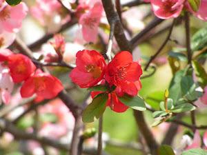 東金レイクサイドヒル 中古住宅で田舎暮らしBlogの花