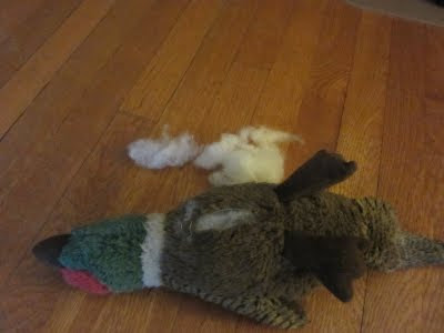 The duck toy is on its back, with stuffing coming him stomach