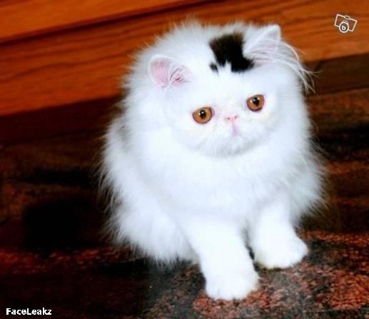 21 Foto Yang Harus Anda Lihat Setelah 21 Mei 2011 Berlalu - 12. Seekor kucing dengan topi permanen berwarna hitam