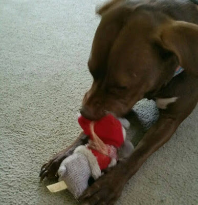 Velvet dog with Christmas toy