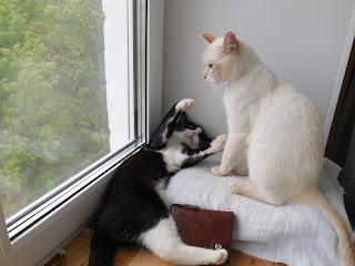 Коты на подоконнике