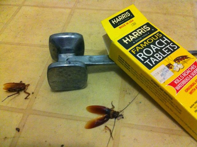 how to get rid of small roaches in my kitchen