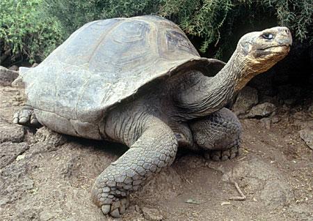 Inilah, Binatang Paling Langka Di Dunia | http://lintasjagat.blogspot.com/