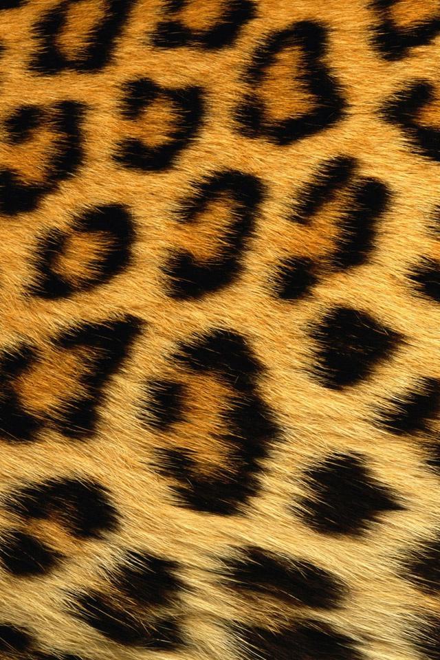 Leopard print iphone 4 wallpaper pocket walls hd for Leopard print wallpaper