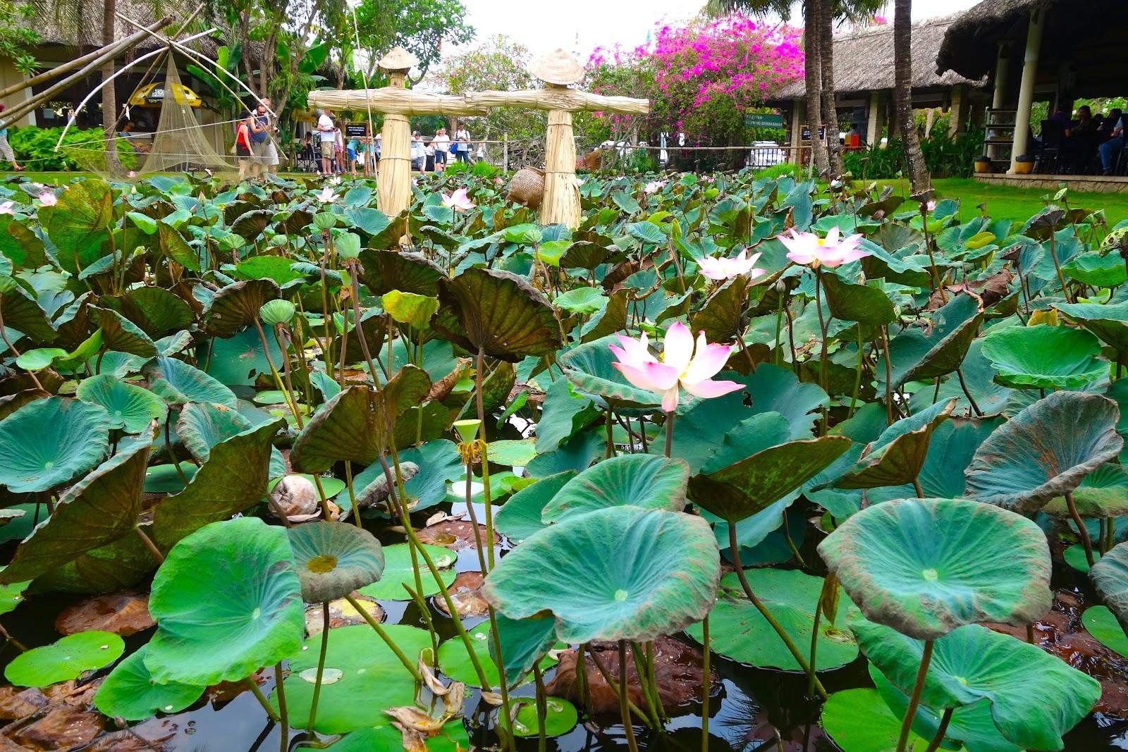 lotus Vietnam 2015