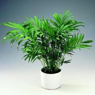 Plantas para Ambientes Templados, Temperatura entre 13 y 18°C