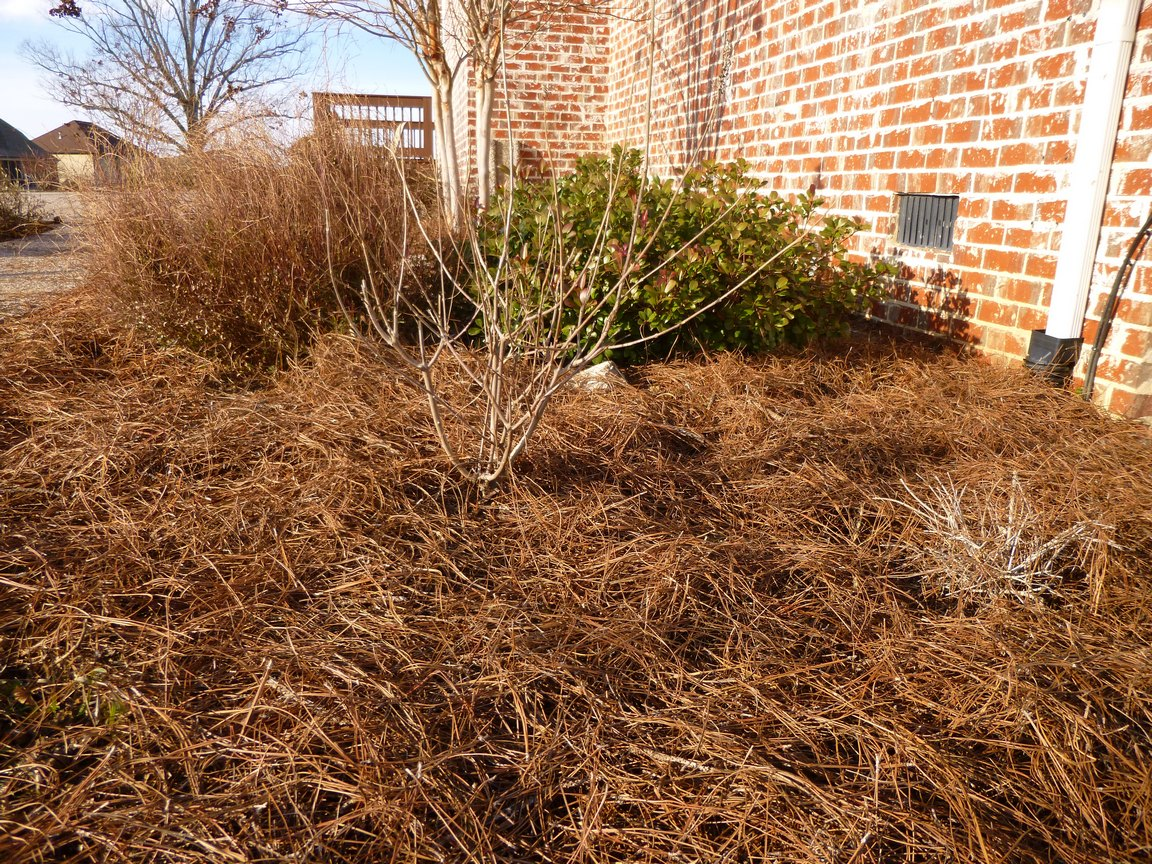 Garden of Aaron: Six Reasons Why Pine Straw Makes the Best Mulch