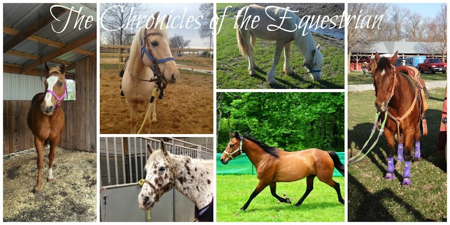Chronicles of the Equestrian