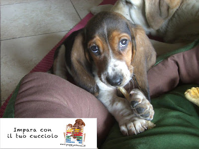 Addestramento Cane: Puppy School