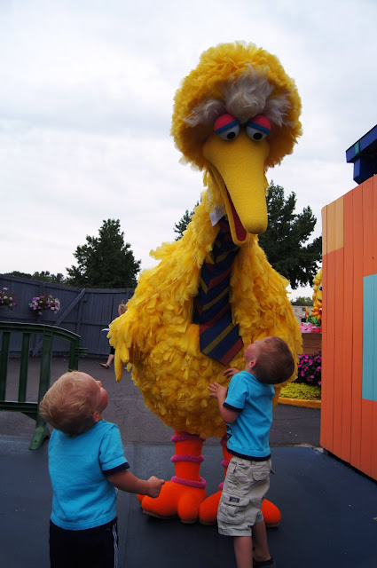chatting with big bird