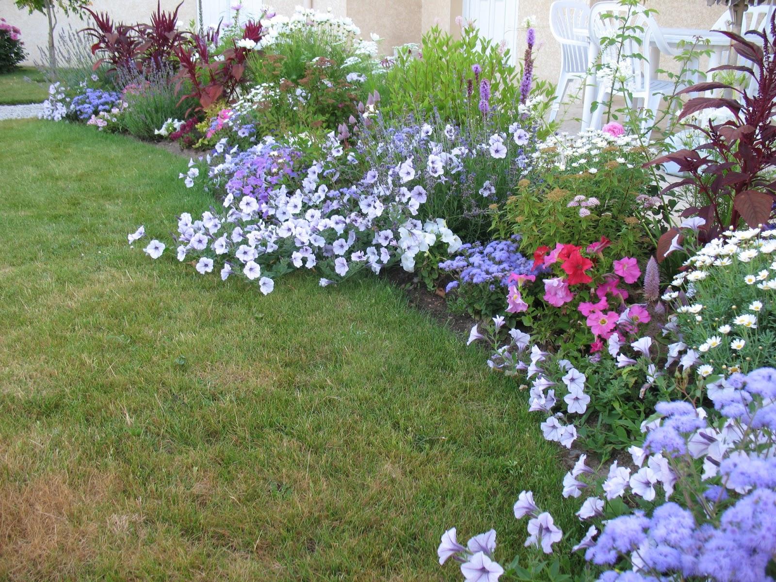 Roses du jardin ch neland surfinia p tunia - Ou planter la rhubarbe dans le jardin ...