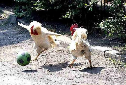 Imagenes Graciosas Sobre Futbol - memes futbol Lo más gracioso y nuevo del internet