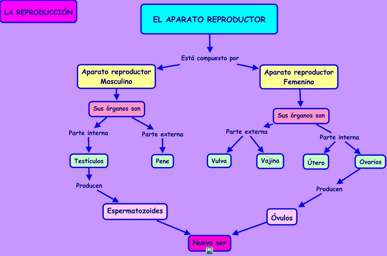 Sistema Reproductor - Portafolio de Ciencias 3