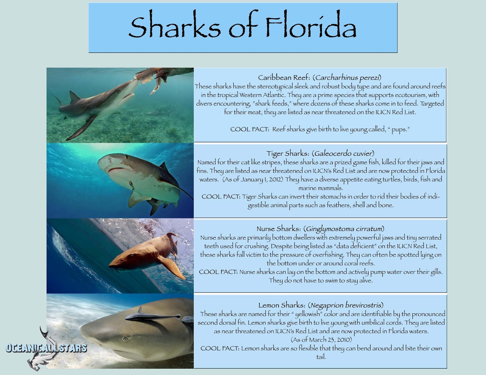 http://2.bp.blogspot.com/-h0y5fPXmlno/T6ALSBrQXII/AAAAAAAAACw/wkKK-a55NJE/s1600/oceanicallstarssharksoffloridasm.jpg