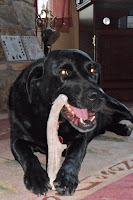 all natural antler dog bone xl breed