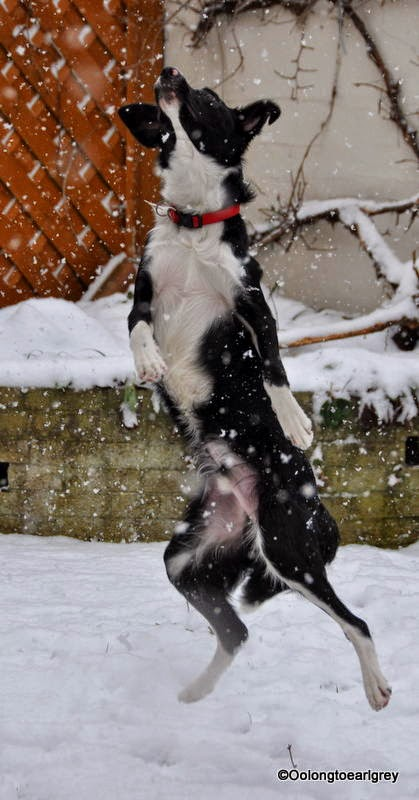 Dog catching snowflakes