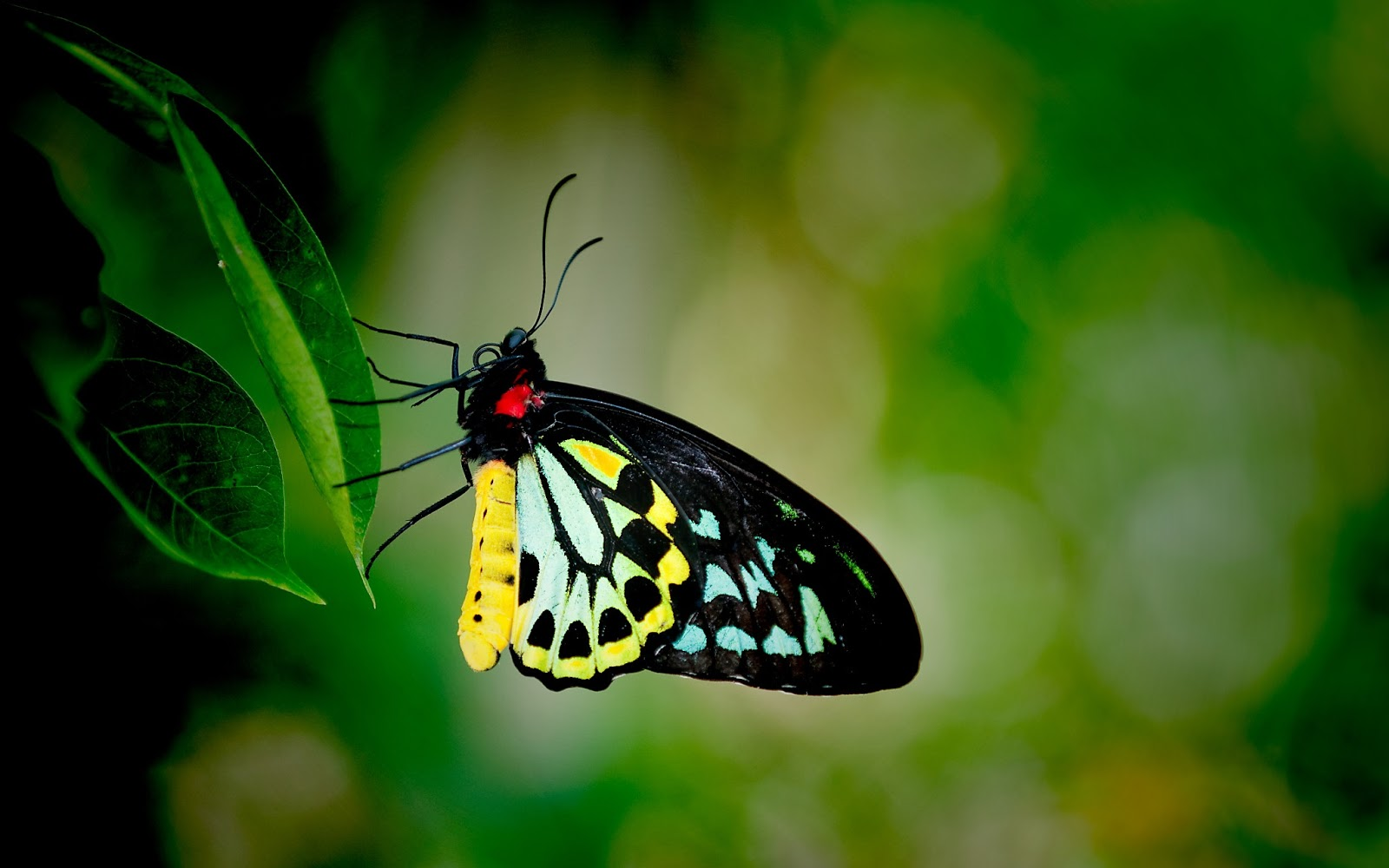 http://2.bp.blogspot.com/-h1FW0-m5IiM/URi4gJ1MQqI/AAAAAAAAED8/eQ10dRboaig/s1600/3D-Colorful-Butterfly-HD-Wallpapers-For-Computer.jpg