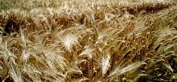 Aziende Agricole in Monferrato