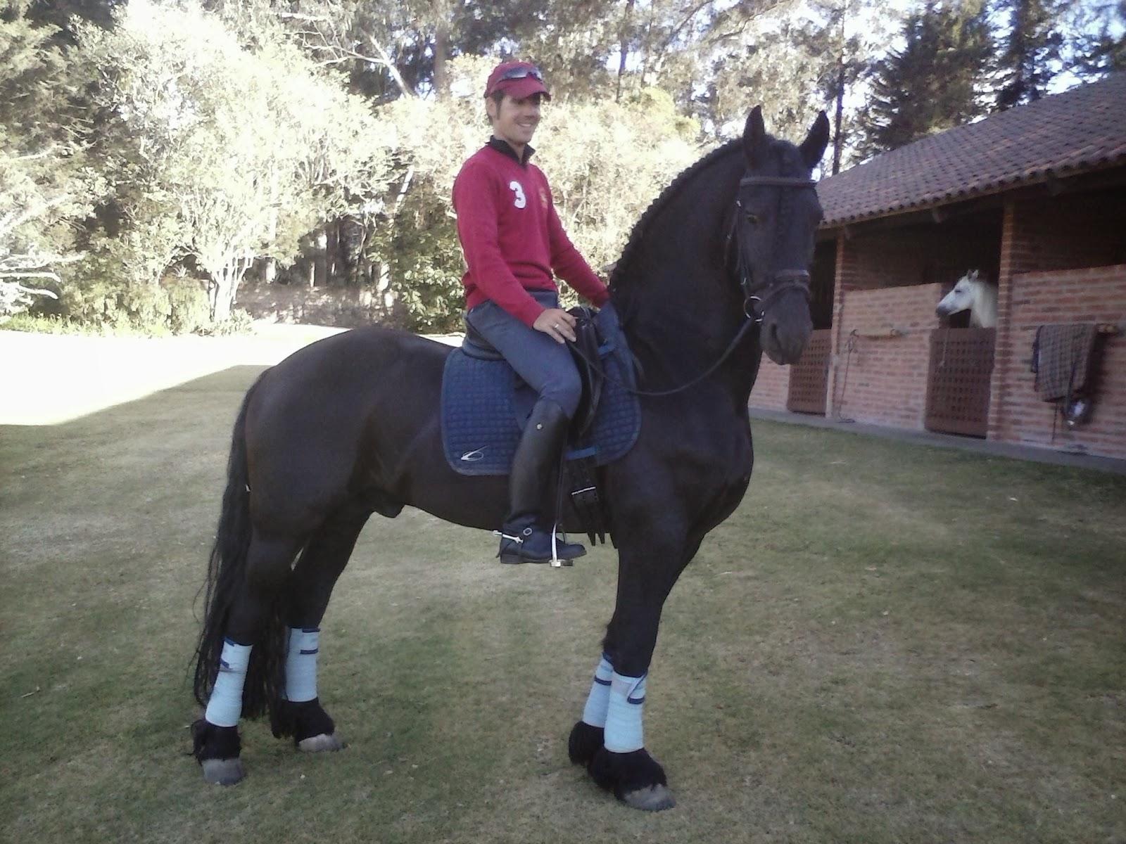 Doma clásica y caballos.: El caballo Frisón.