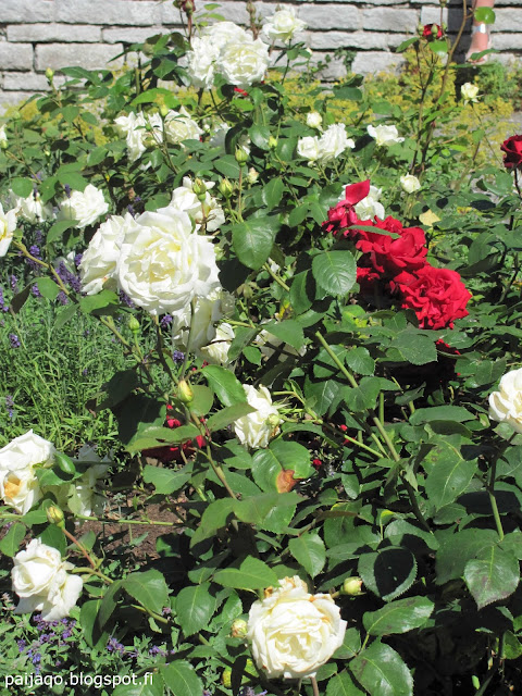 Visby kasvitieteellinen puutarha