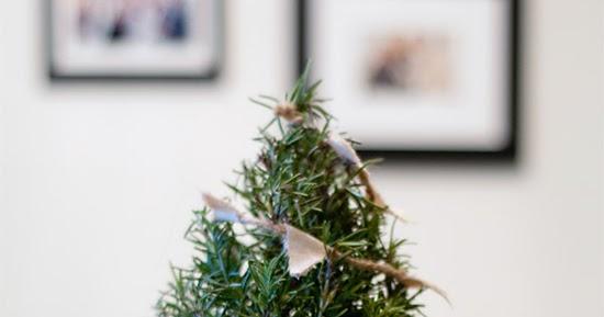 3 real mini Christmas trees diys | My Paradissi