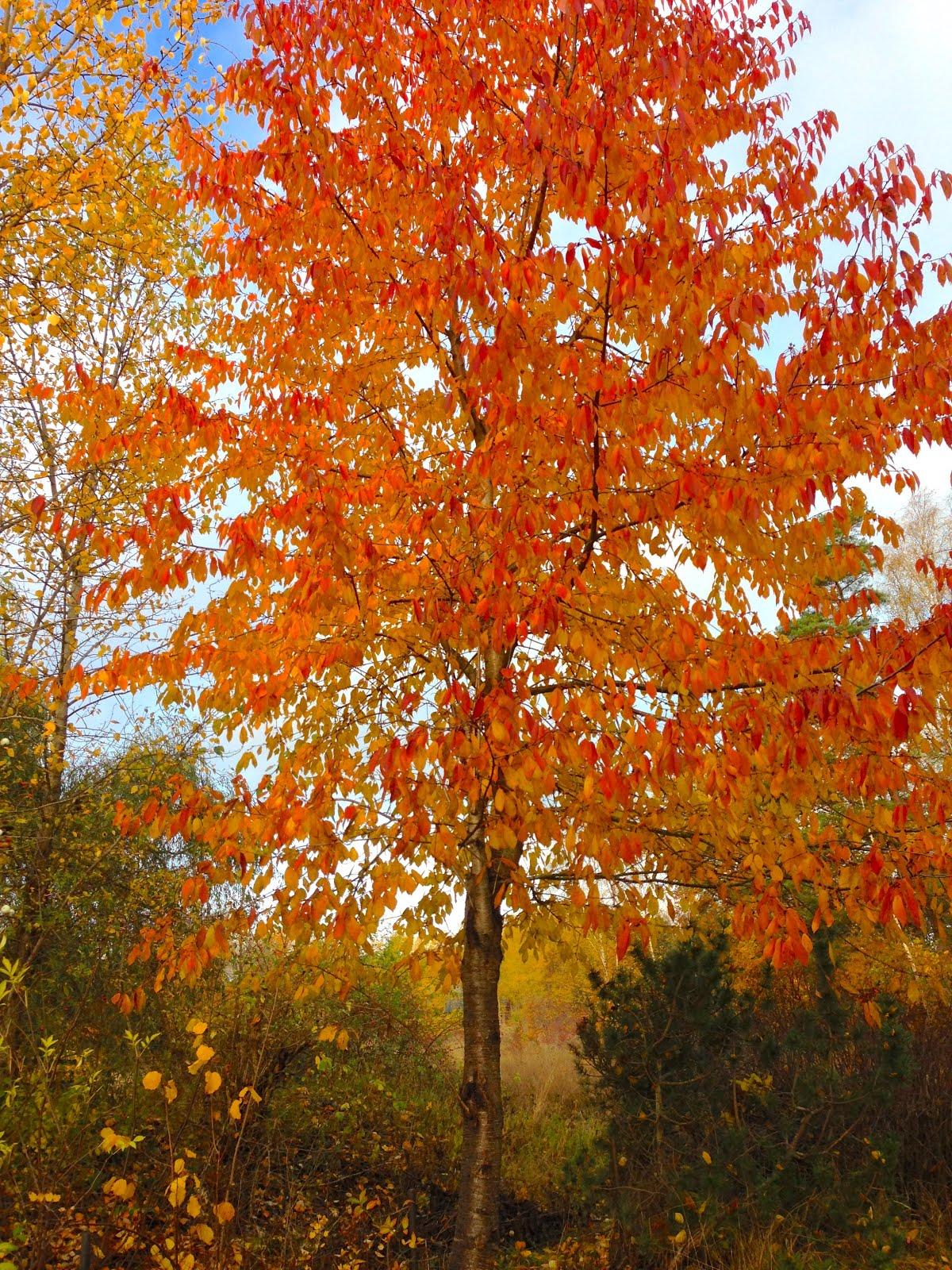 Den vackra hösten 2020