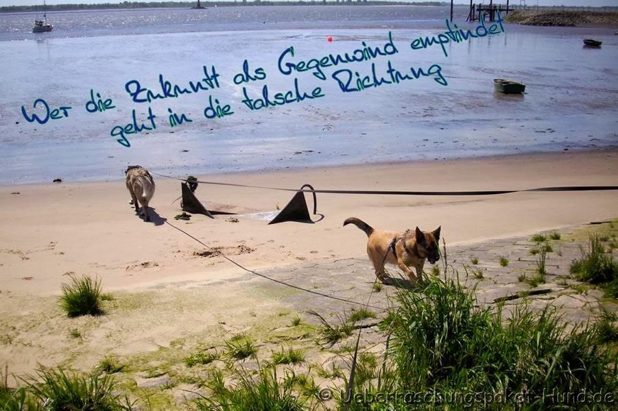 Überraschungspaket Hund - ein Hundeblog der zeigt, wie ...