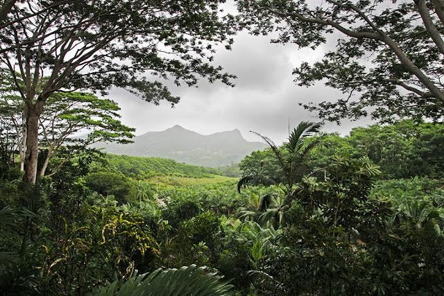 panorama foresta pluviale mauritius isole maurizius