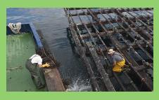 El cierre de la mayoría de las bateas amenaza el suministro del mejillón http://cort.as/G-2V