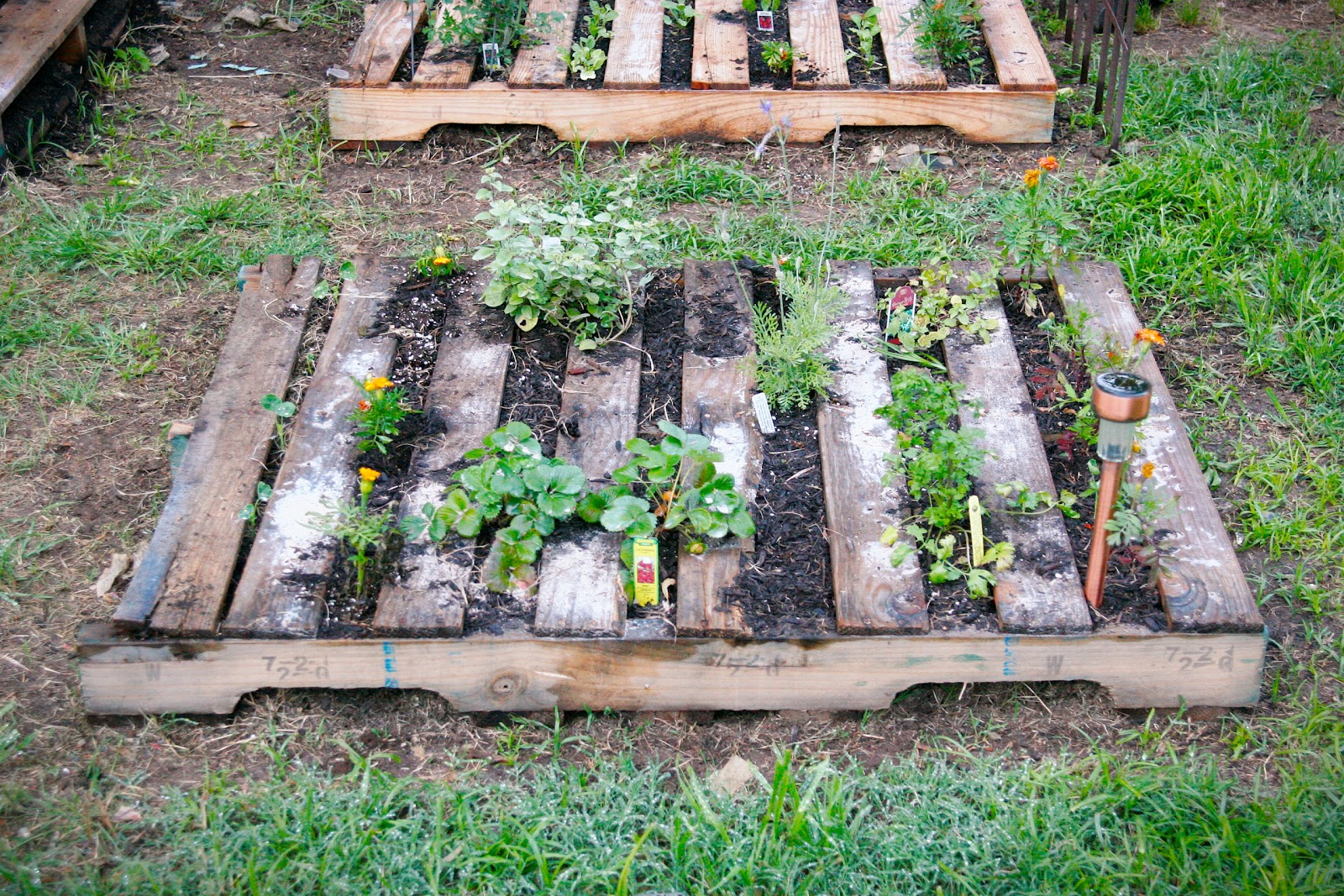 Pallet metalsgirl pallet garden for How to make garden beds from pallets