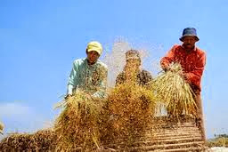 alat perontok padi sederhana