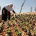 Wanita Palestin Menanam Bunga dalam Sisa Bom Asap Tentere Israel
