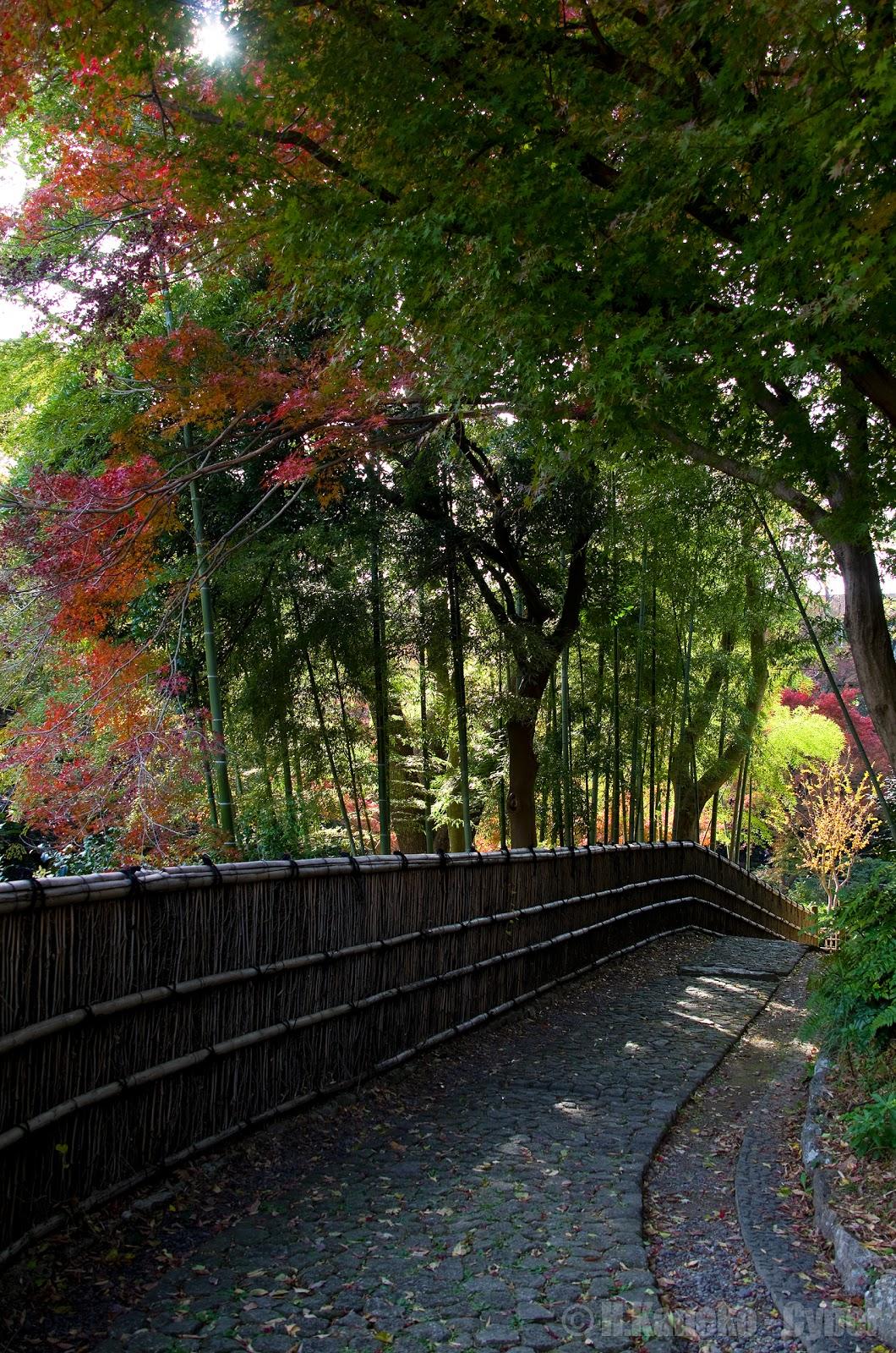 浜松城公園の錦秋 - 三