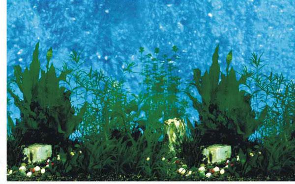 Background Aquarium Plant Background Desktops Pics