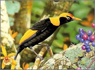 %D8%B7%D9%8A%D9%88%D8%B119 صور رمانسية طبيعية لأجمل الطيور 2014
